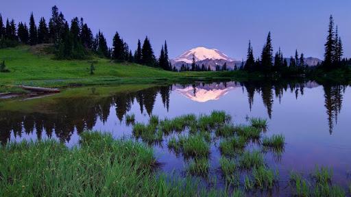 Summer, Tipsoo Lake, Mount Rainier National Park, Washington.jpg