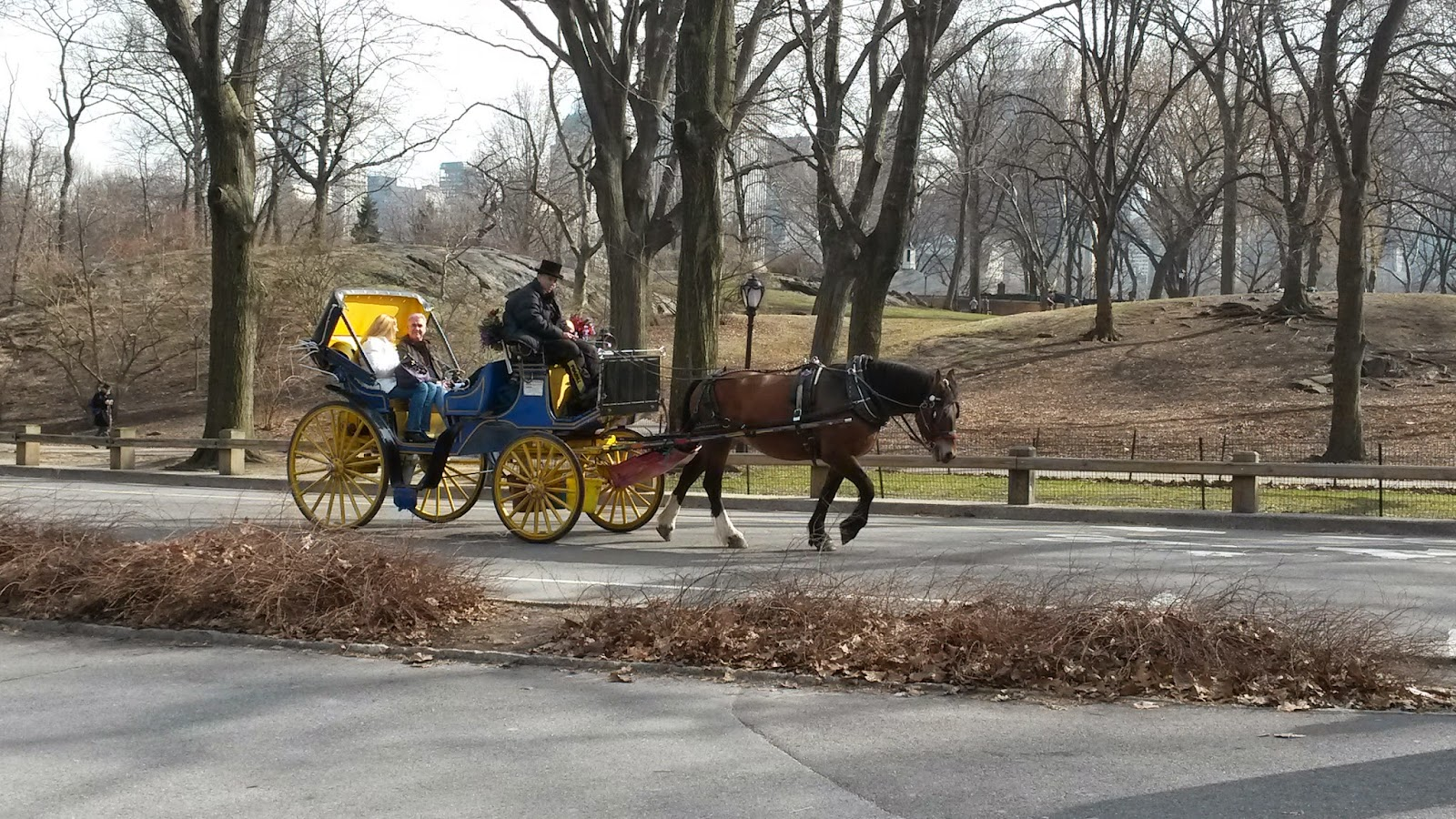 Carroza, Mateo, Central Park, Manhattan, New York, Elisa N, Blog de Viajes, Lifestyle, Travel