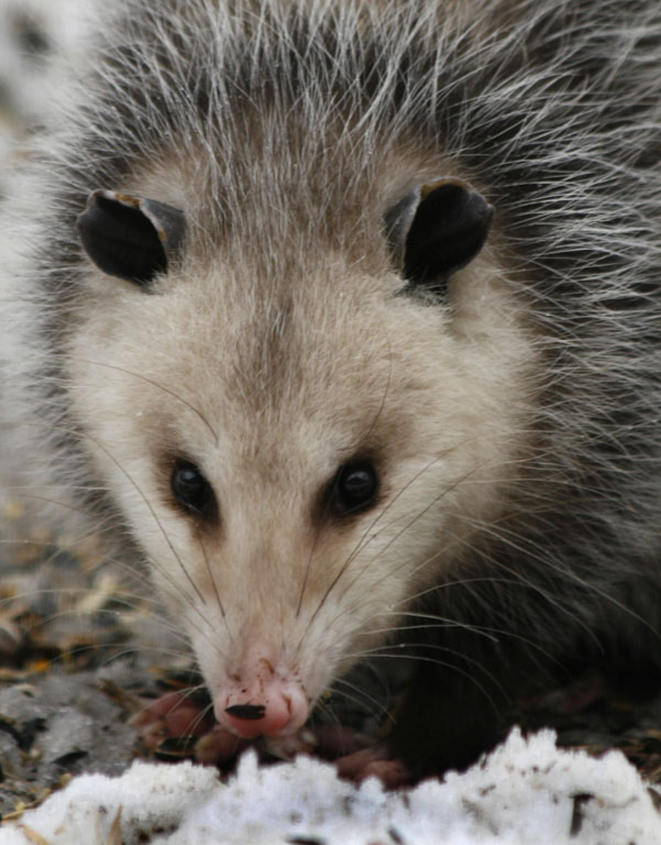 Smiling Possum When he smiles i can almost