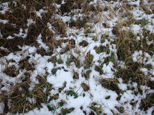 узоры из снега