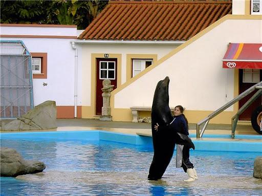 Дельфинарий в Лиссабоне морской лев фото