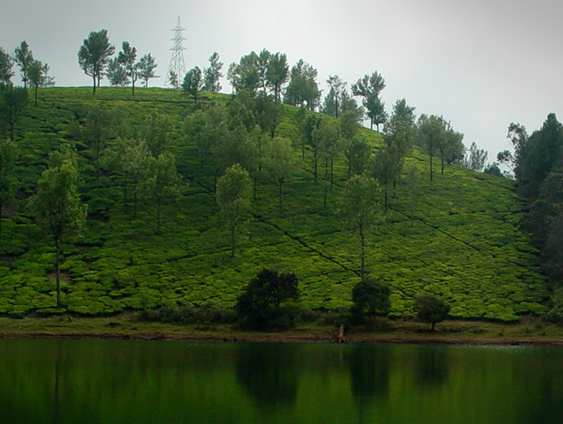 Ooty Nature