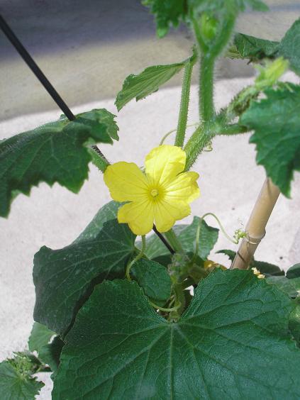 foto de pepa flor: