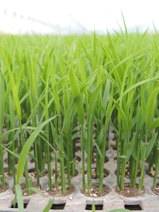 緑の絨毯2