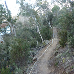 Pallaibo Track near the Thredbo River (302698)