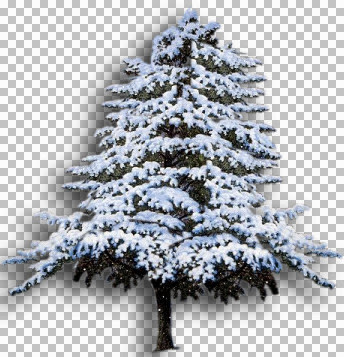 Snow tree Eloise.jpg