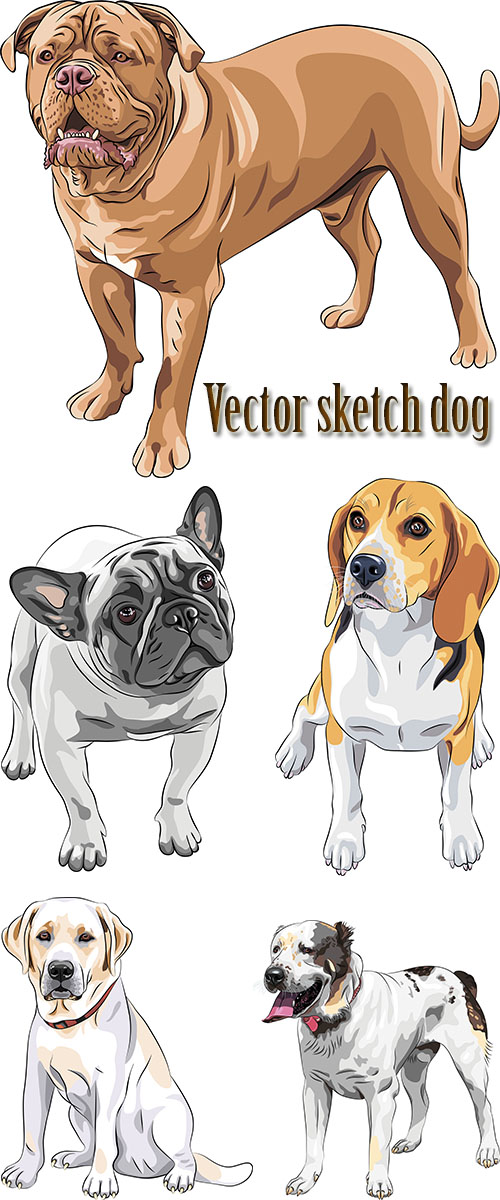 Stock: Vector sketch dog