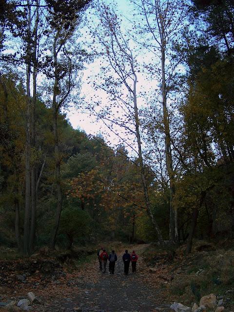 Pista Forestal junto Andarax