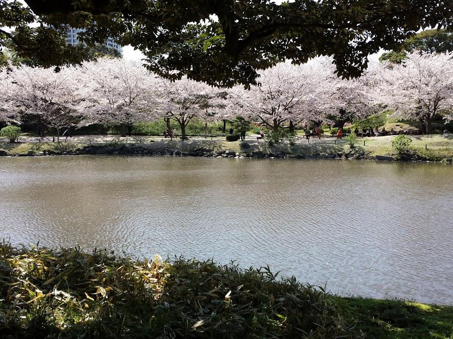sakura shiba rikyu