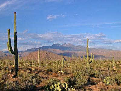 Sonoran%252520Desert Keanekaragaman hayati (biodiversitas)