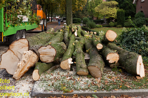 Bomen gekapt Museumlaan in overloon 20-10-2014 (36).jpg