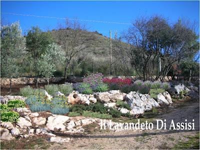 idee per giardino roccioso e uliveto