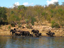 Some elephants enjoying the river.