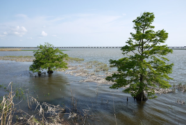 two trees in Mobile Bay