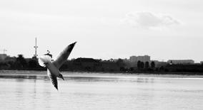 litle bird