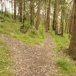 Tracks near Mt Sugarloaf (324677)