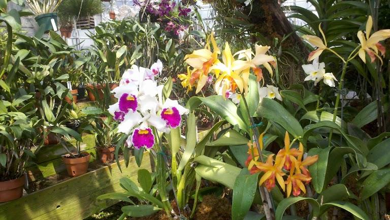 UNC Charlotte Botanical Gardens, Charlotte - RueBaRue