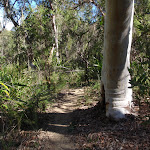 Bush track near Mt Olive (158845)