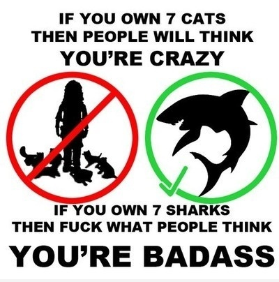Pet : Cat VS Shark