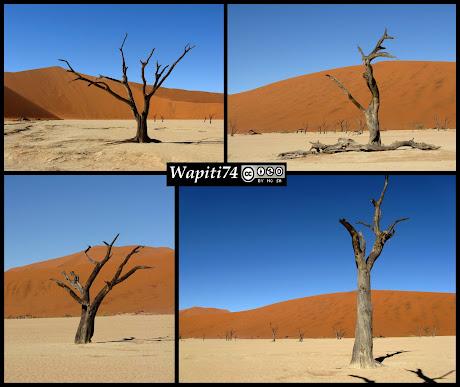 Balade australe... 11 jours en Namibie - Page 2 IMG_0790