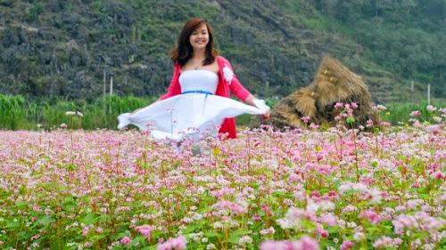 hoa tam giac mach7 001 Mùa hoa tam giác mạch lại về trên núi đá hà Giang