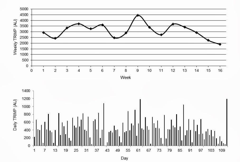 Breakthrough Endurance: Marathon Periodization and Taper