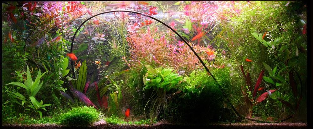 Aquarium en aquascaping 3 quelle faune et quelle flore for Aquarium bac