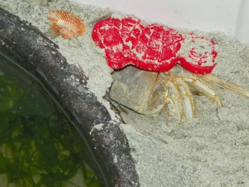 Pinchey, my sand crab 102_0213