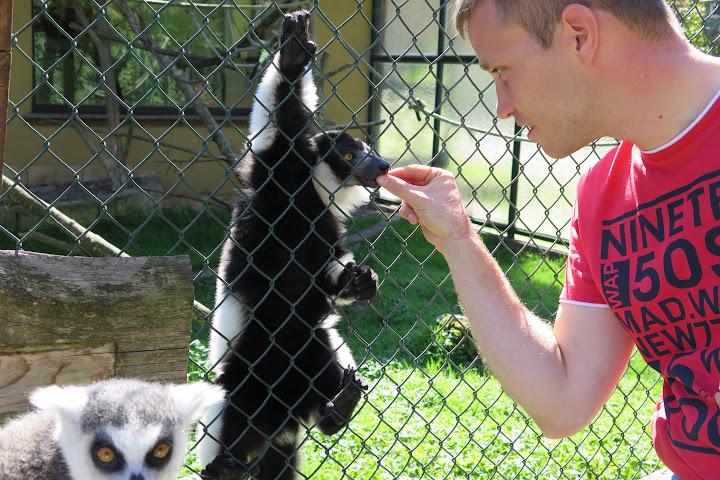 Links die Affen rechts der Autor