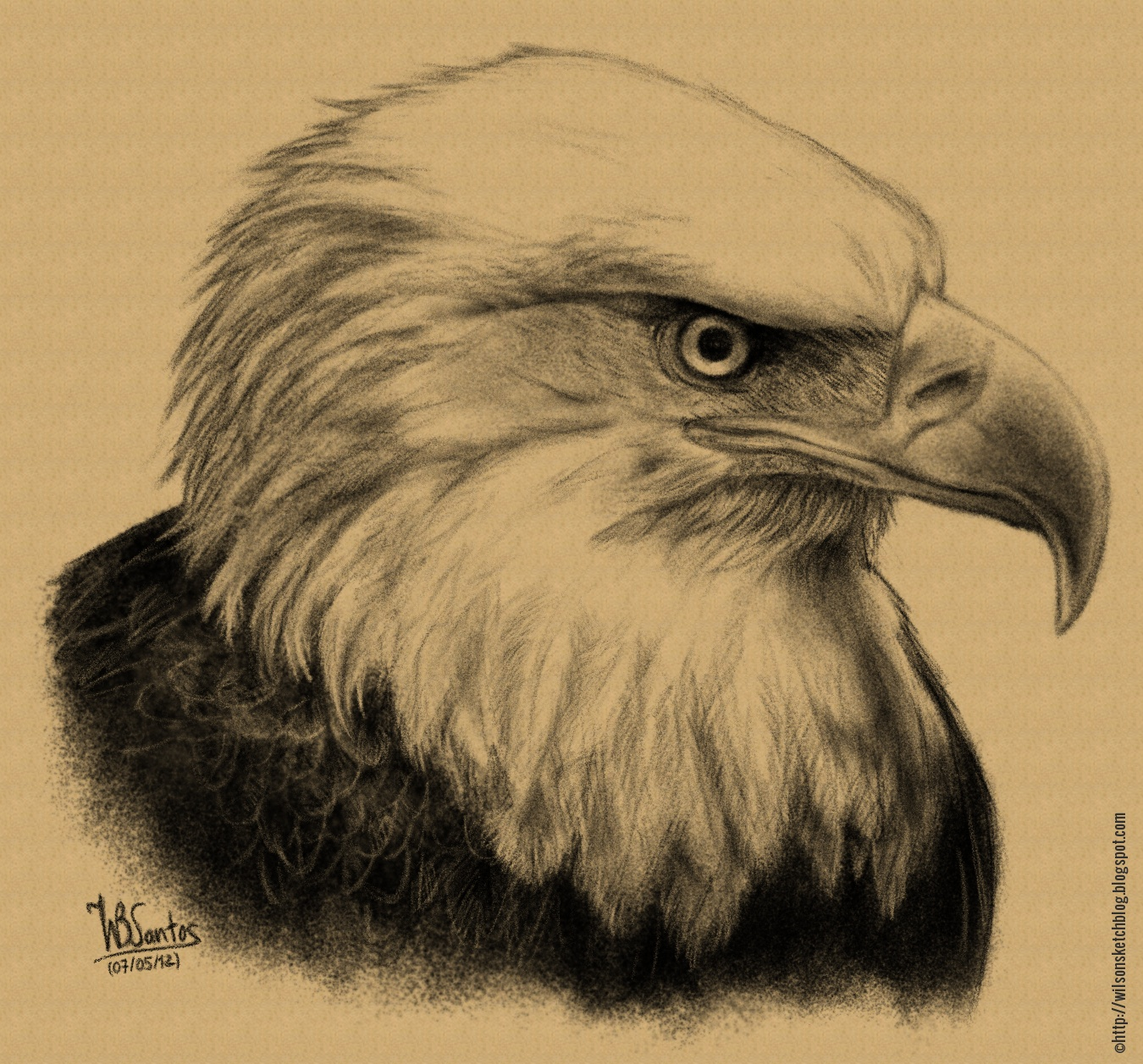 Bald eagle pencil drawing using mypaint