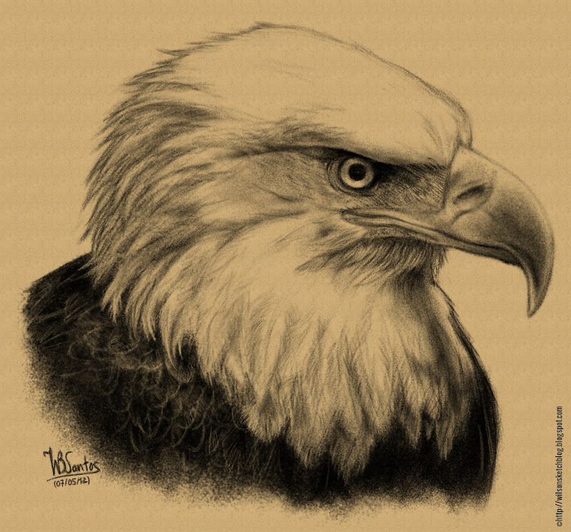 Bald eagle pencil drawing, using MyPaint.