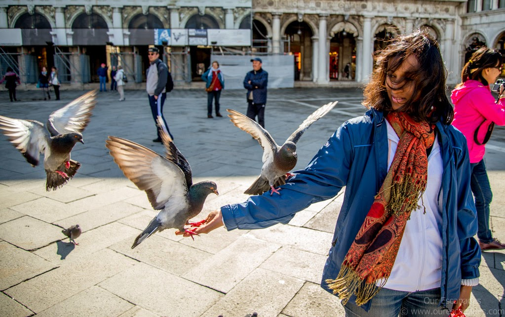Flocks of pigeons in Piazza San Marco