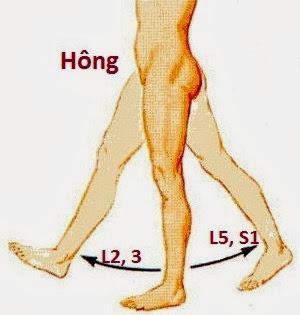 chi phối vận động ở hông