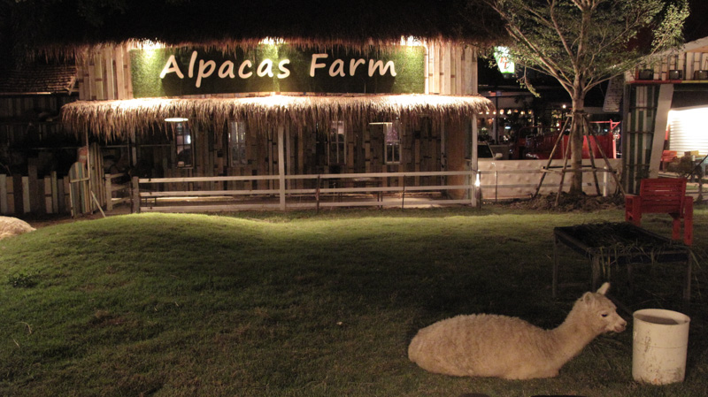103 alpaca view farm cuisine toeysk for Alpaca view farm cuisine bangkok