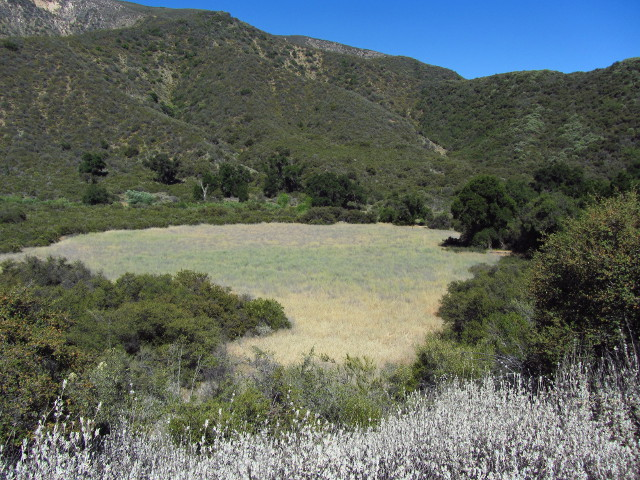 large meadow with camp at the far end