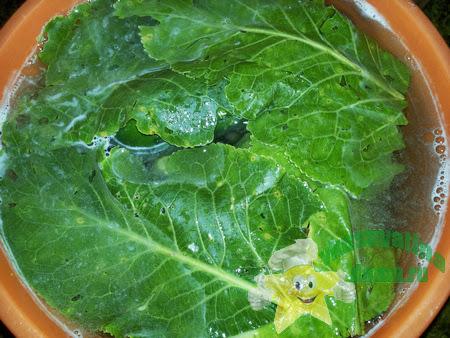 Малосольные огурцы с листьями хрена