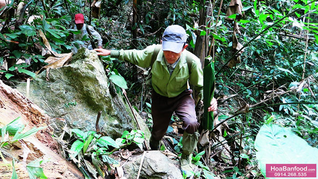 Khai thác Mật Ong Rừng ở Lai Châu - 10