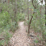 Track through heath below Plateau Pde (73521)