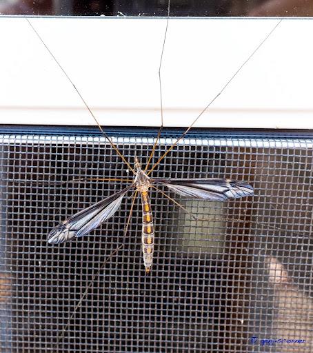 Mosquito-2014-06-8-21-13.jpg