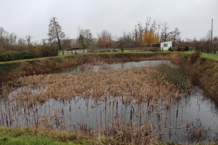 Forum aquajardin bassin koi jardin aquatique mare for Combien coute une piscine naturelle