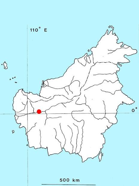 (Cryptocoryne ferruginea var. sekadauensis)