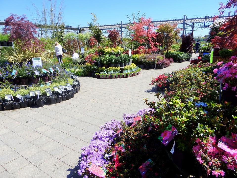 Rendezvous en pépinière pour végétaliser votre jardin  ~ Truffaut La Ville Du Bois