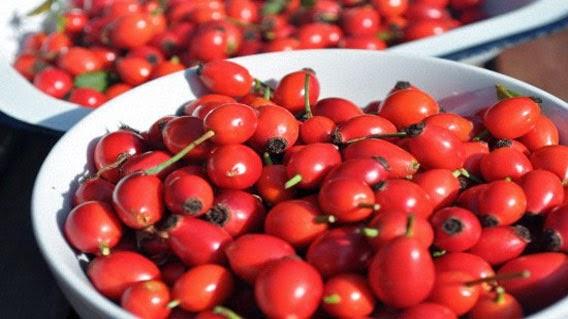 Польза ягод шиповника