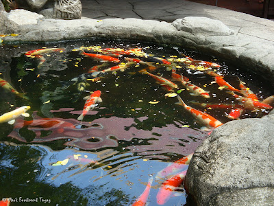 Sunway Lagoon - Wildlife Park Batch 4 Photo 14