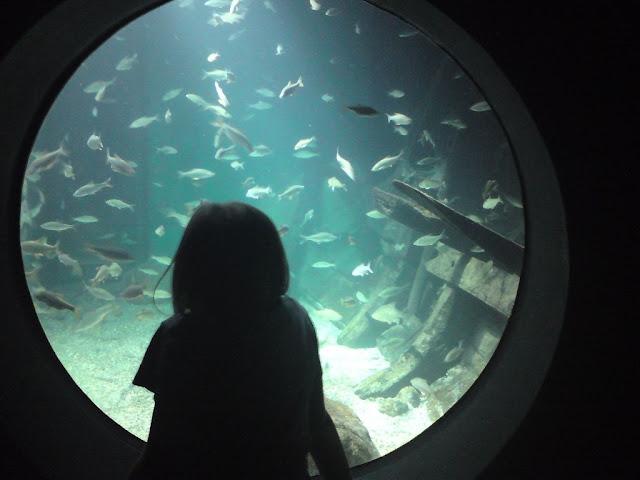 Straslund - Oceanarium
