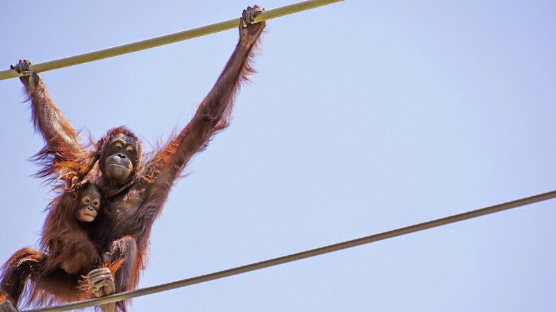 多摩動物公園 手長猿 写真