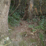 The rough Devil's Hole Bushtrack (11120)