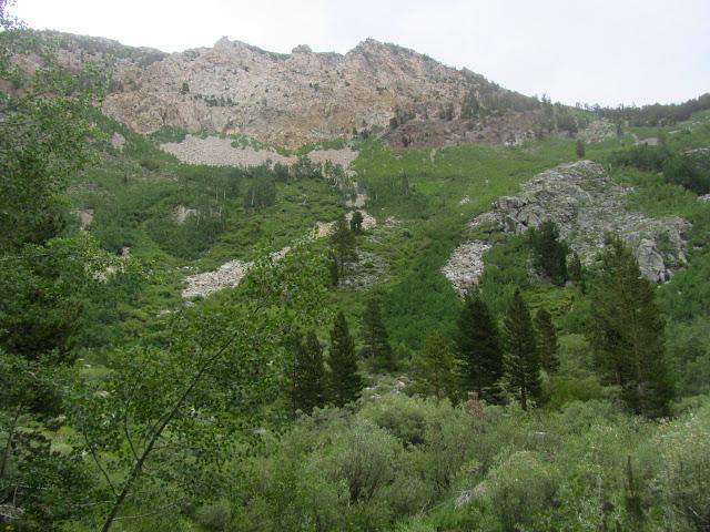 lush mountain side
