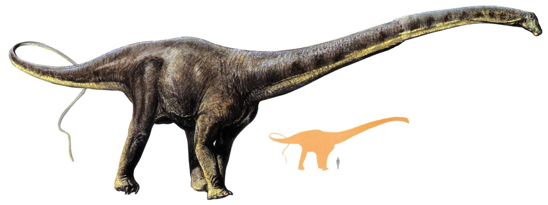 apatosaurus vs diplodocus - 1500×562