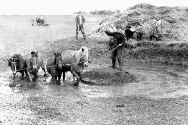 Изготовление самана в яме с помощью лошадей, 1938-1940 годы.
